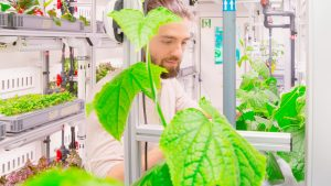 A scientist inspects plants in the EDEN ISS greenhouse. Photo: DLR, CC-BY 3.0